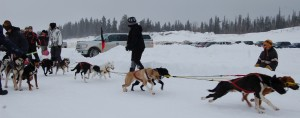 Participants in the dog sled races take off at last year's Kamba Carnival NNSL file photo