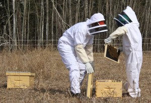 Andrew (left) and Anna Cassidy check on a hive on their property in Paradise Gardens May 16. Photo by Sarah Ladik NNSL