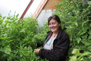 "Jackie Milne shows off what she calls ""jungle basil"" in a greenhouse on her property in Hay River. -- Sarah Ladik"
